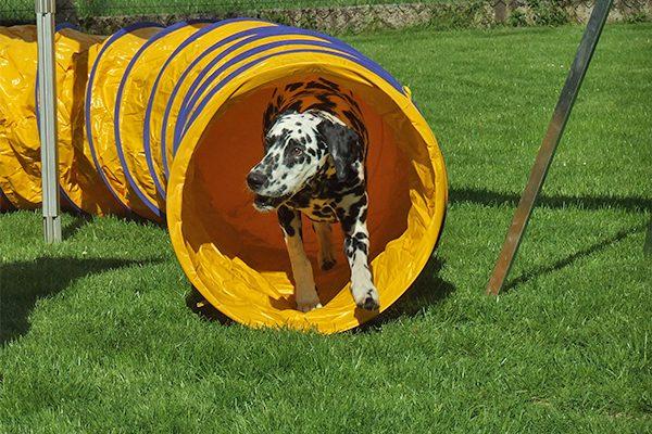 Hundesportgeräte